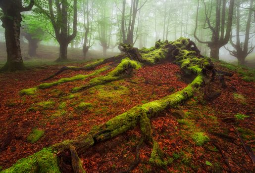 Photo free landscape, Basque Country, nature