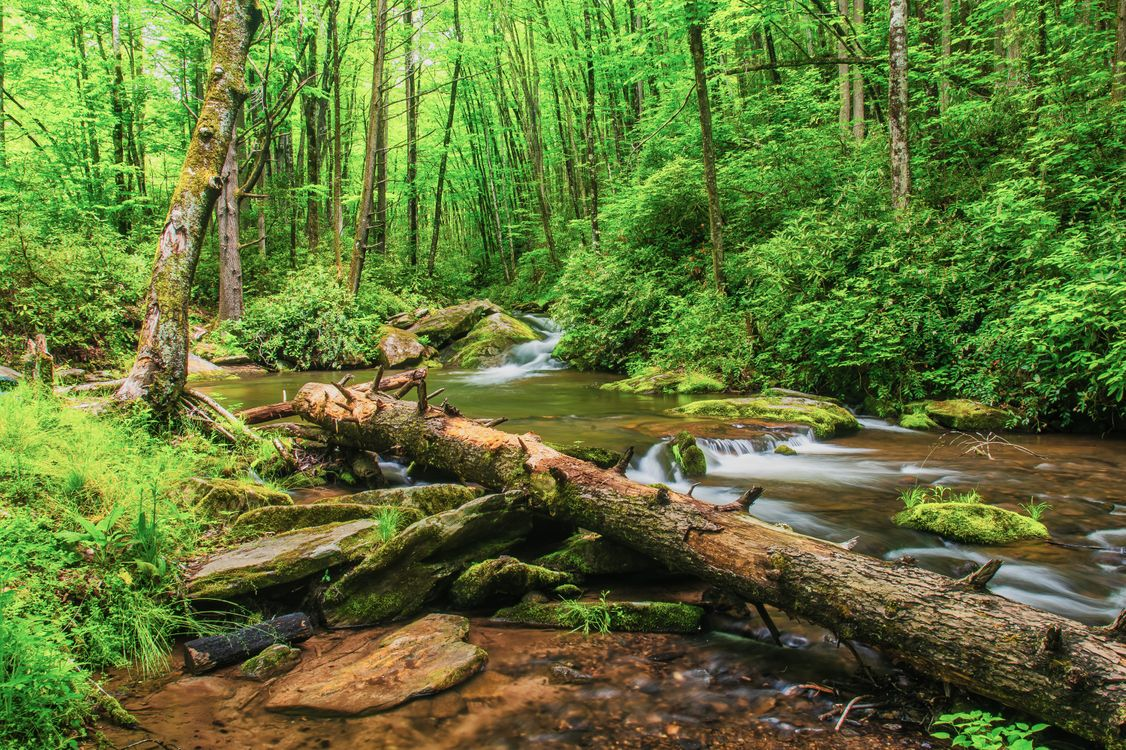 Фото бесплатно North Carolina, Great Smoky Mountains National Park, водопад, река, камни, лес, деревья, природа, пейзаж, пейзажи