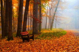Заставки скамейка, туман, пейзаж
