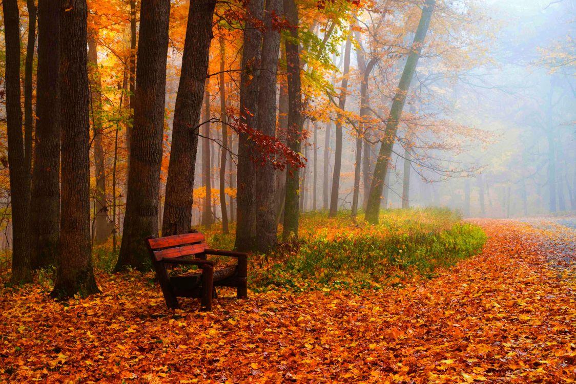 Обои скамейка, туман, пейзаж картинки на телефон