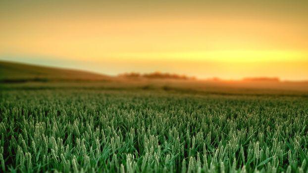Фото бесплатно закат, зеленое поле, облака