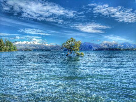 Бесплатные фото дерево Ванака,озеро Ванака,Новая Зеландия,горы,дерево,вода,природа,пейзаж
