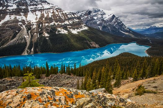 Photo free Peyto Lake, rocks, forest