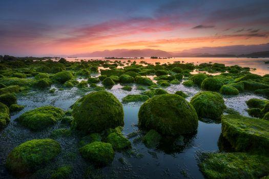 Бесплатные фото Новая Зеландия,Кайкоура,закат,море,камни,водоросли,берег,пейзаж