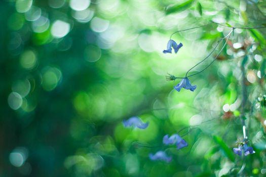 Фото бесплатно синие цветы, боке, фотография