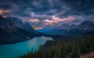 Photo free lake, Peyto Lake, trees