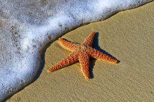 Фото бесплатно пляж, берег, воды