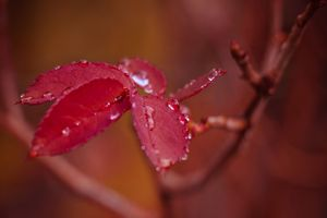 Photo free branch, water droplets, macro