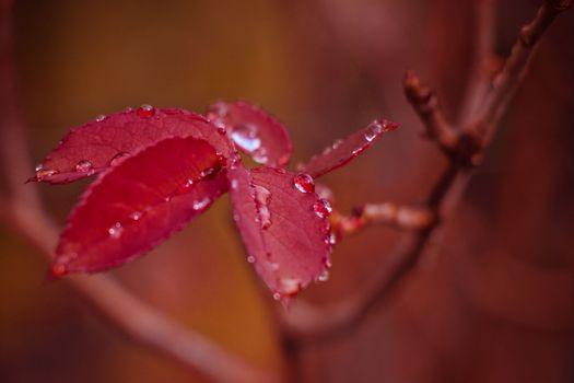 Бесплатные фото ветка,капли воды,лист,макро,растения