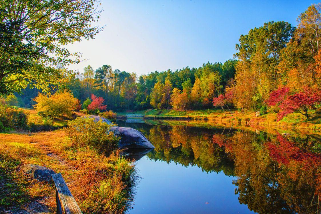 Фото бесплатно Fall at DeHart Botanical Gardens, Franklin County, NC, осень, река, мост, парк, деревья, природа, пейзаж, осенние краски, пейзажи