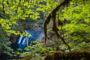 Бесплатные фото Lower North Falls,Silver Falls State Park,Oregon,водопад,лес,деревья,пейзаж