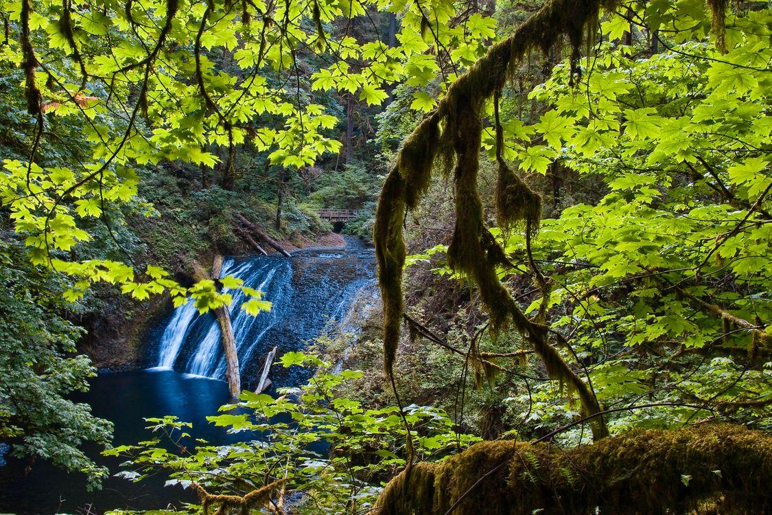 Фото бесплатно Lower North Falls, Silver Falls State Park, Oregon, водопад, лес, деревья, пейзаж, пейзажи
