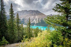 Photo free mountains, Peyto Lake, trees
