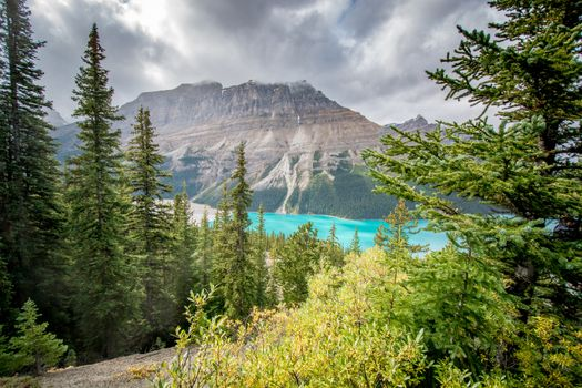 Photo free mountains, Peyto Lake, trees