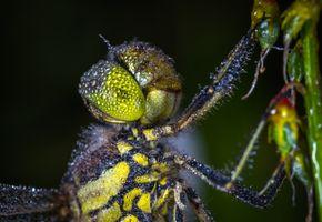 Бесплатные фото стрекоза,роса,насекомое,макрос,макросъемка,беспозвоночный,крупным планом