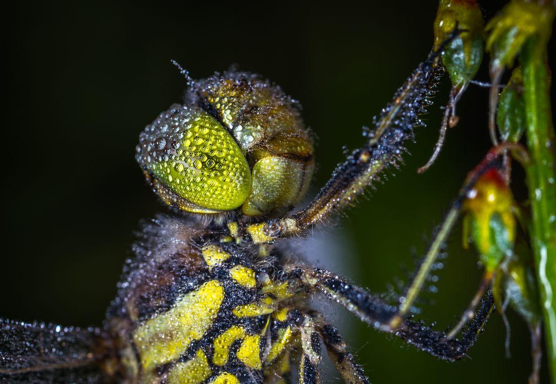 Фото стрекоза роса насекомое - бесплатные картинки на Fonwall