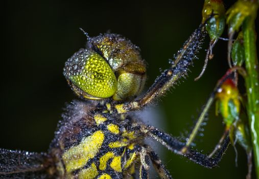 Photo free dragonfly, dew, insect