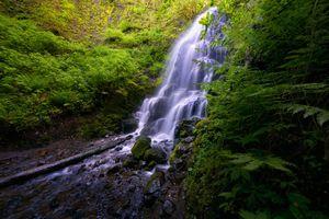 Заставки лес, мох, водопад