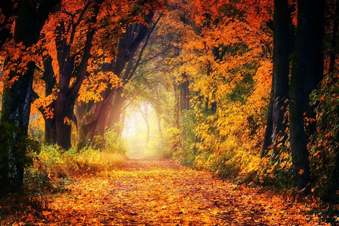 Фото бесплатно золотая осень, лес, деревья, парк, осенние листья, осенние краски, природа, дорога, пейзаж, пейзажи