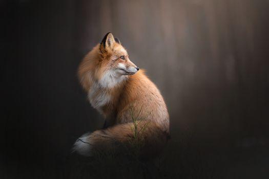 Фото бесплатно лисица, пейзаж, животные