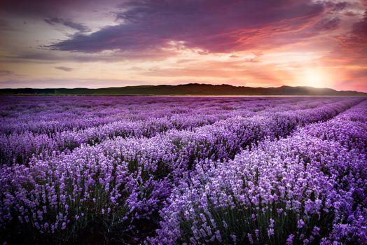 Закат на лавандовом поле