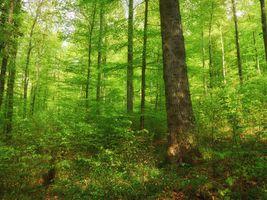 Фото бесплатно лето, лес, деревья, природа