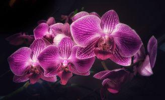 Magic Orchid · free photo