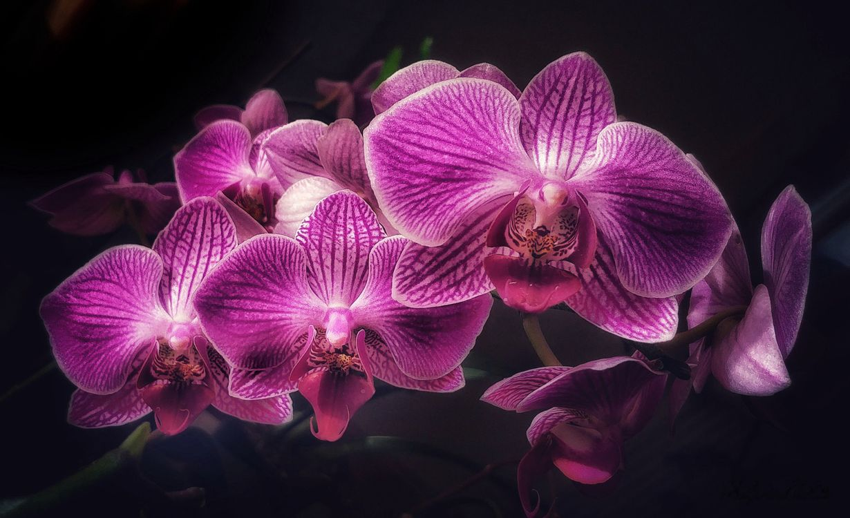 Фото бесплатно орхидея, орхидеи, цветок, цветы, флора, цветы