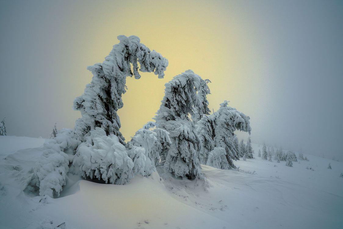 Фото бесплатно зима, снег, сугробы, деревья, закат, природа, пейзаж, пейзажи