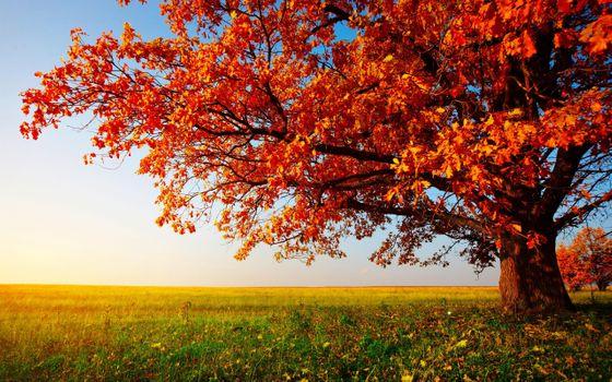 Фото бесплатно осень, дерево, поле, простор, солнечный день, листопад, листья на траве, пейзаж