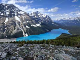 Бесплатные фото Peyto Lake,Banff National Park,Canadian Rockies,озеро,горы,лес,деревья
