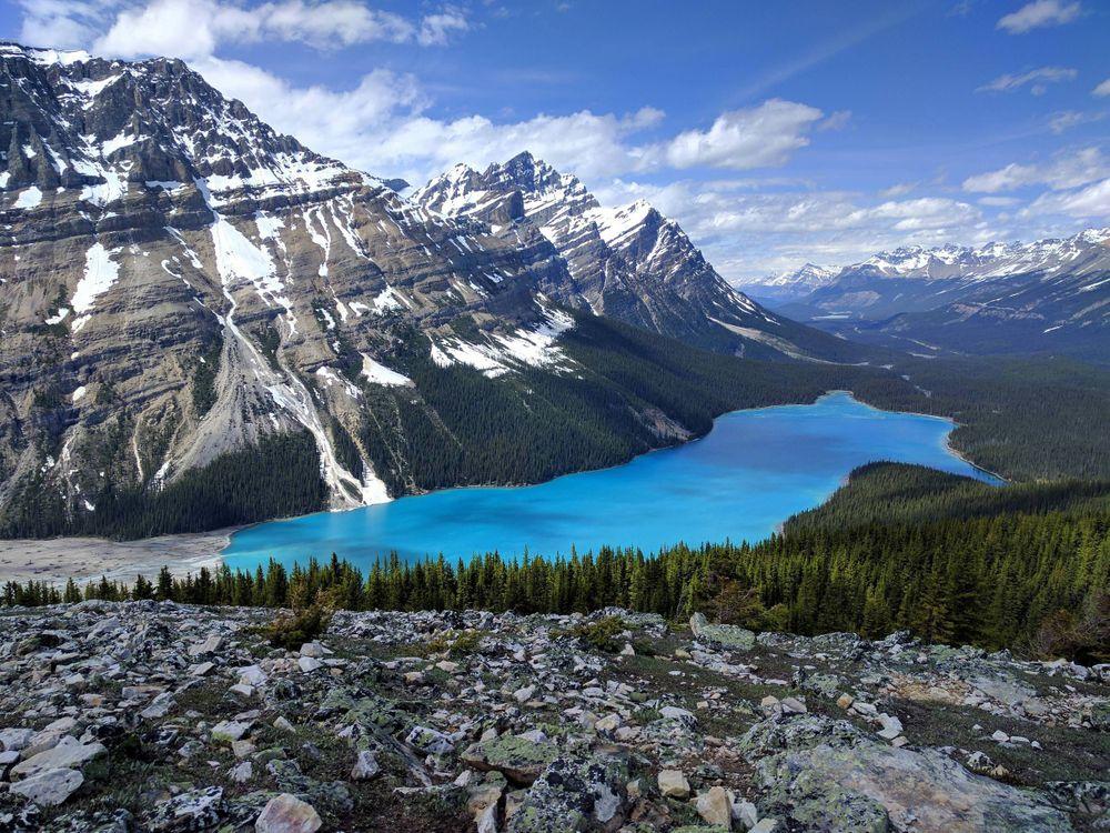 Фото бесплатно Peyto Lake, Banff National Park, Canadian Rockies, озеро, горы, лес, деревья, пейзаж, пейзажи