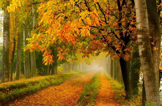 Фото бесплатно цвета осени, листопад, осень, цвета, падение, лес, листья, природа, парк, дорога, деревья, прогулка