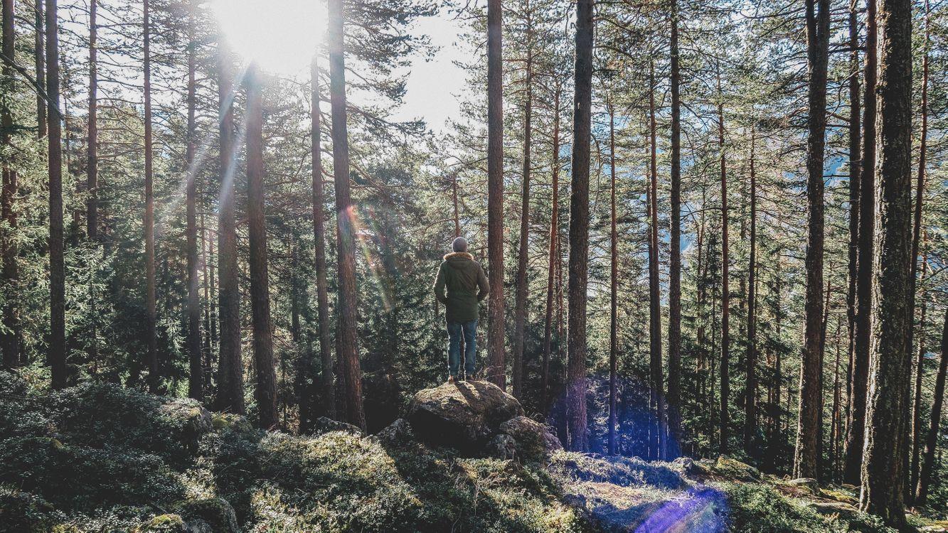 Фото бесплатно дерево, лес, камень - на рабочий стол