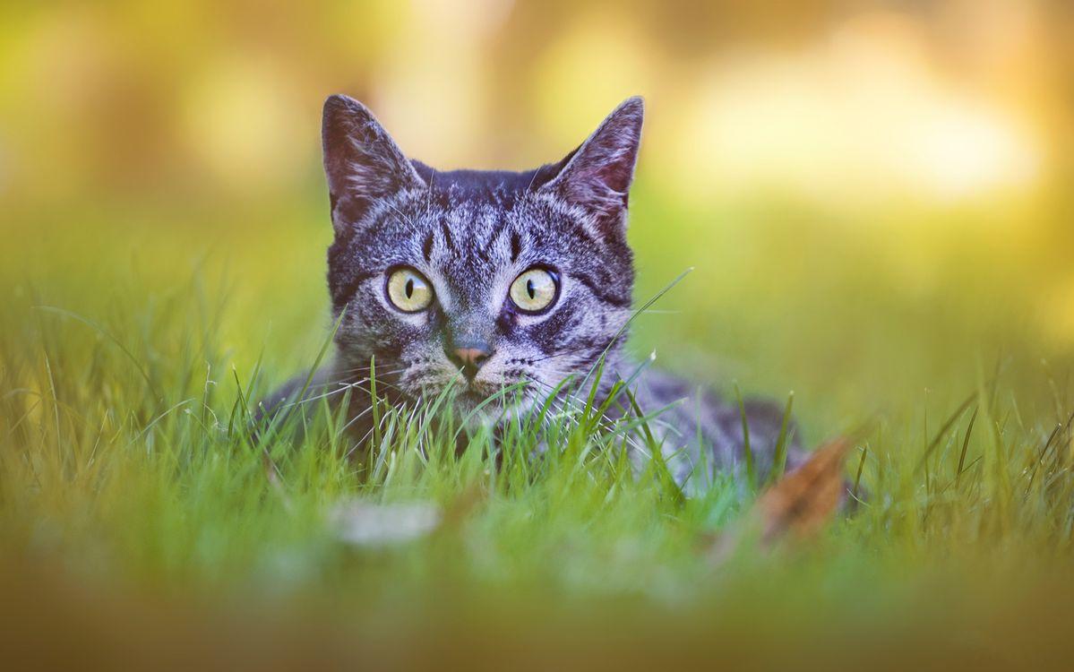 Испуганный кот в траве · бесплатное фото