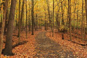 Фото бесплатно осенние краски, осенние листья, деревья