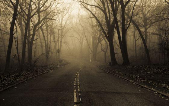 Photo free autumn, dark, fog