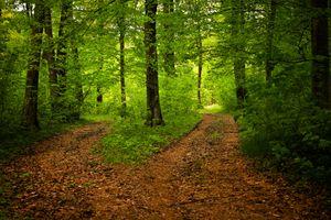 Бесплатные фото лес,деревья,дорога,природа,пейзаж