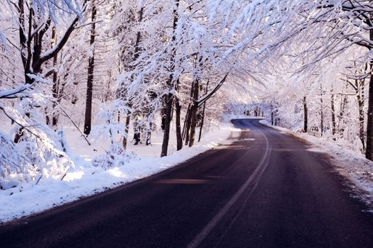 Photo free forest path, first snow, road