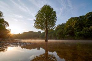 Фото бесплатно tree, sky, water