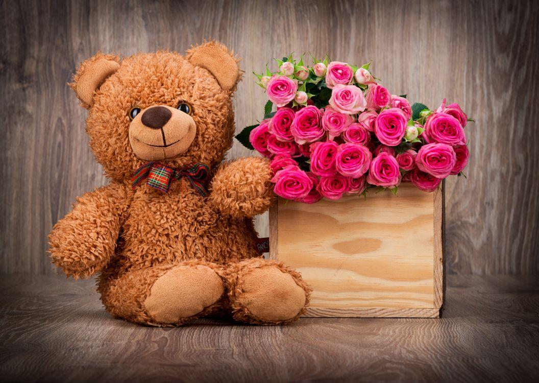 Фото бесплатно медведь, любовь, настроение - на рабочий стол
