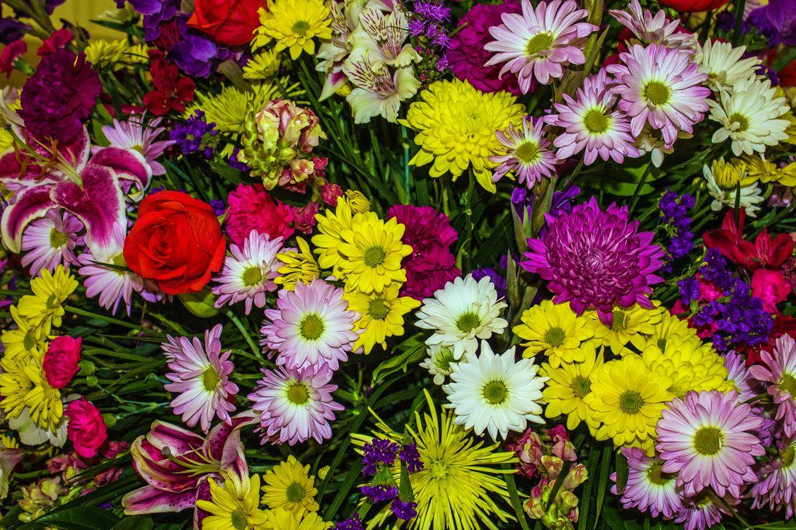 Обои флора, букет, цветочная композиция картинки на телефон