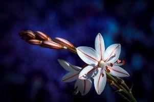 Фото бесплатно Орхидея, флора, растения