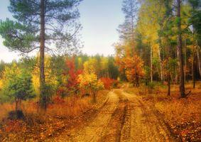 Фото бесплатно осень, дорога, лес, деревья, пейзаж, осенние краски, краски осени