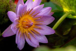 Фото бесплатно флора, цветок, водоём