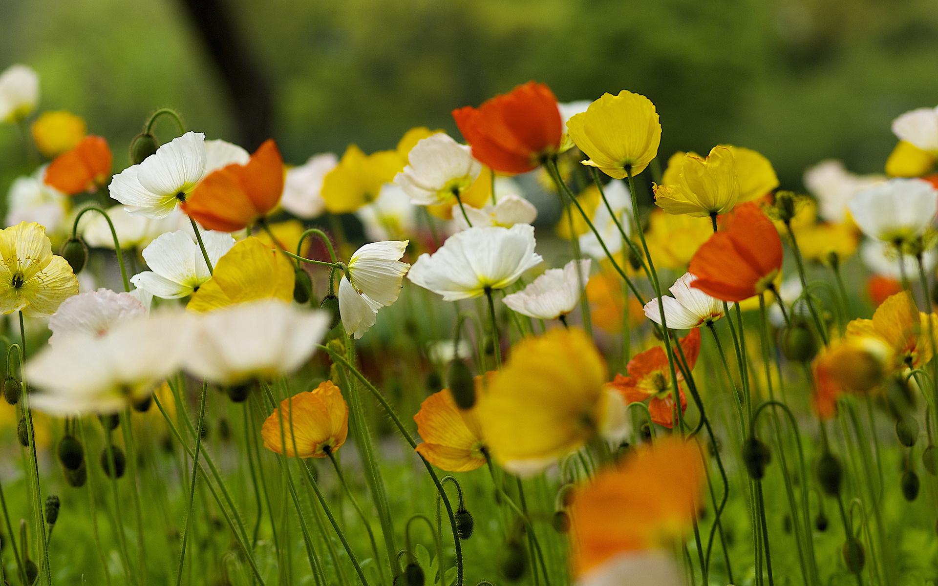 фотообои на рабочий стол лето цветы отверстие произвольной