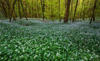 Фото бесплатно пейзаж, цветы, лес