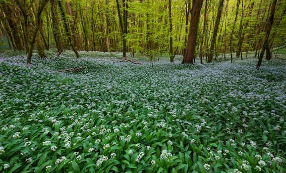 Бесплатные фото лес,деревья,цветы,природа,пейзаж
