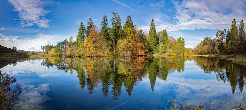 Заставки деревья, панорама, лес