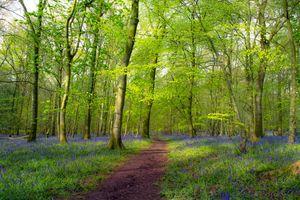 Заставки лес, пейзаж, путь